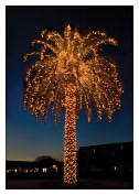 Product Image. Title: CHRISTMAS PALM TREE CHRISTMAS BOXED CARD