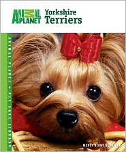 Wendy Bedwell-Wilson - Yorkshire Terriers