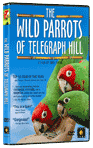 Video/DVD. Title: The Wild Parrots of Telegraph Hill